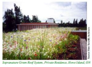 Semi-intensive green roof- Ontario