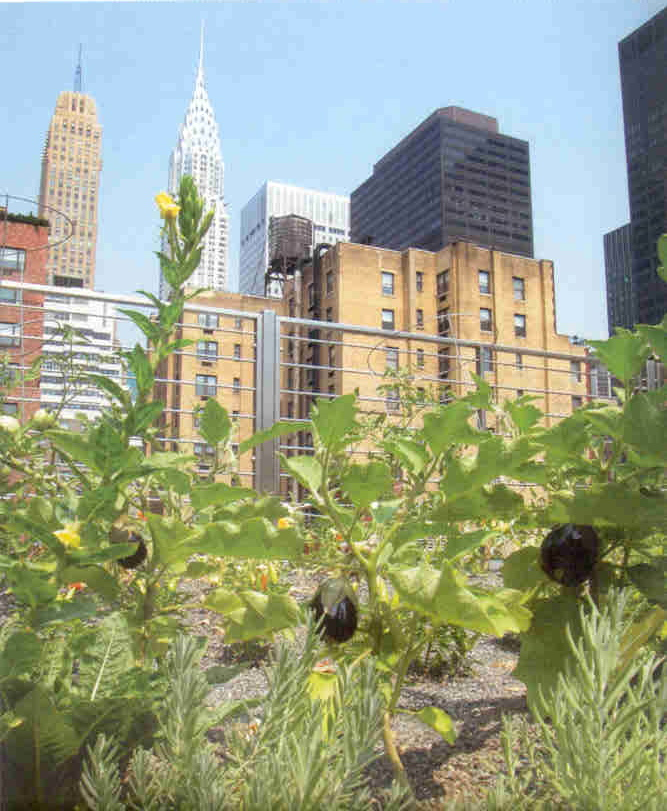 Green roof on Earthpledge's building, NYC