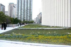 New City Hall Green Roof- Toronto